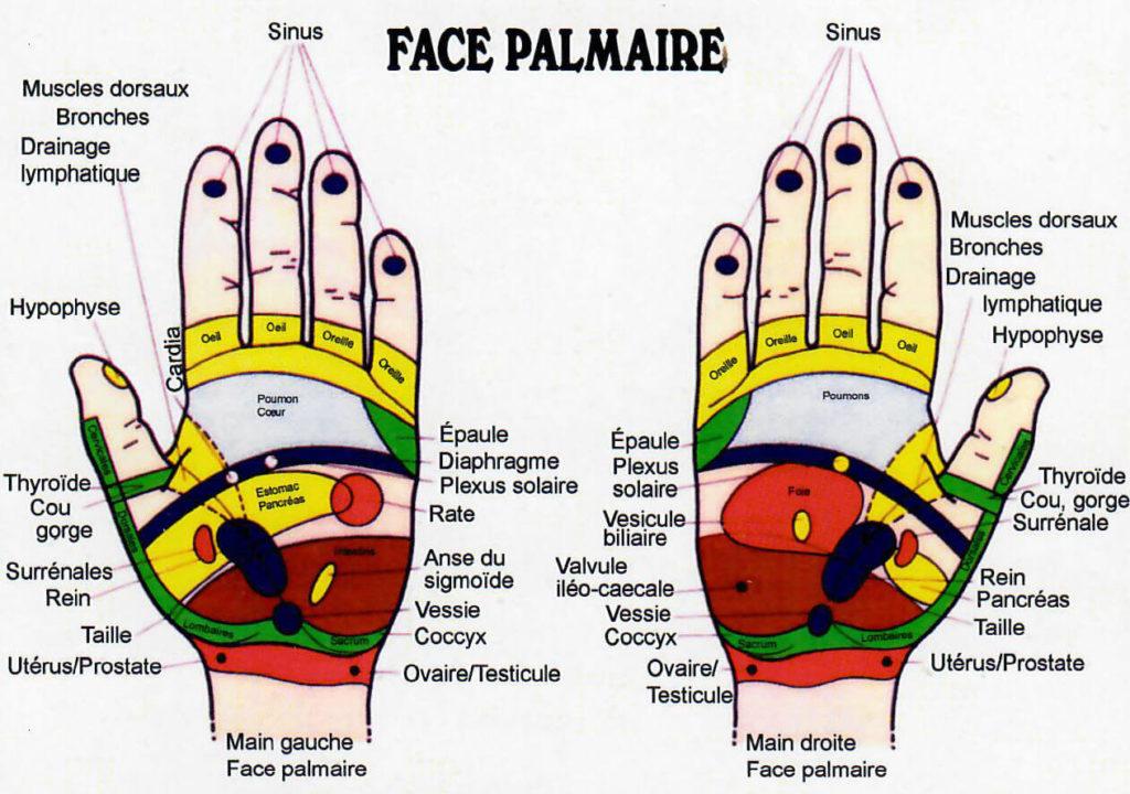 Face palmaire